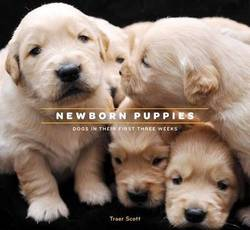 Newborn Puppies product image